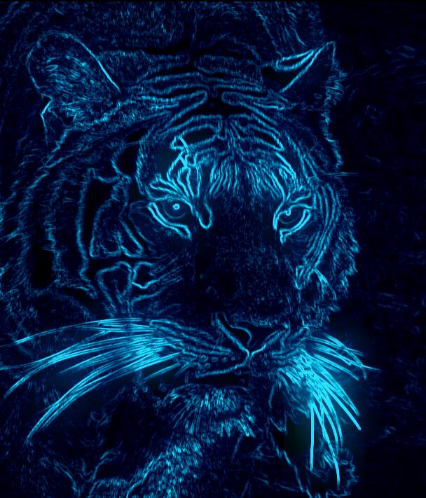 48 Neon Tiger Wallpaper On Wallpapersafari