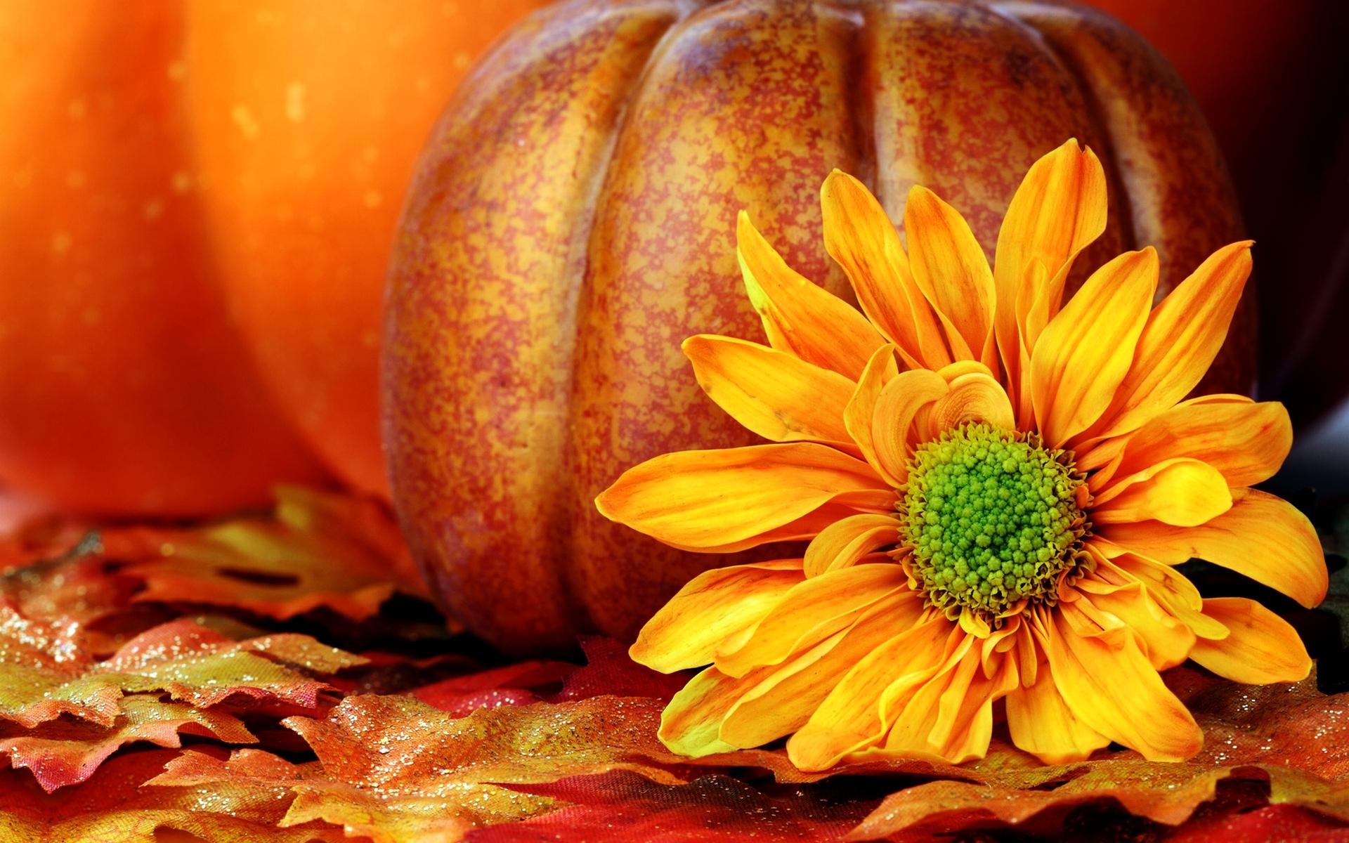 Fall Wallpap... Harvest Background