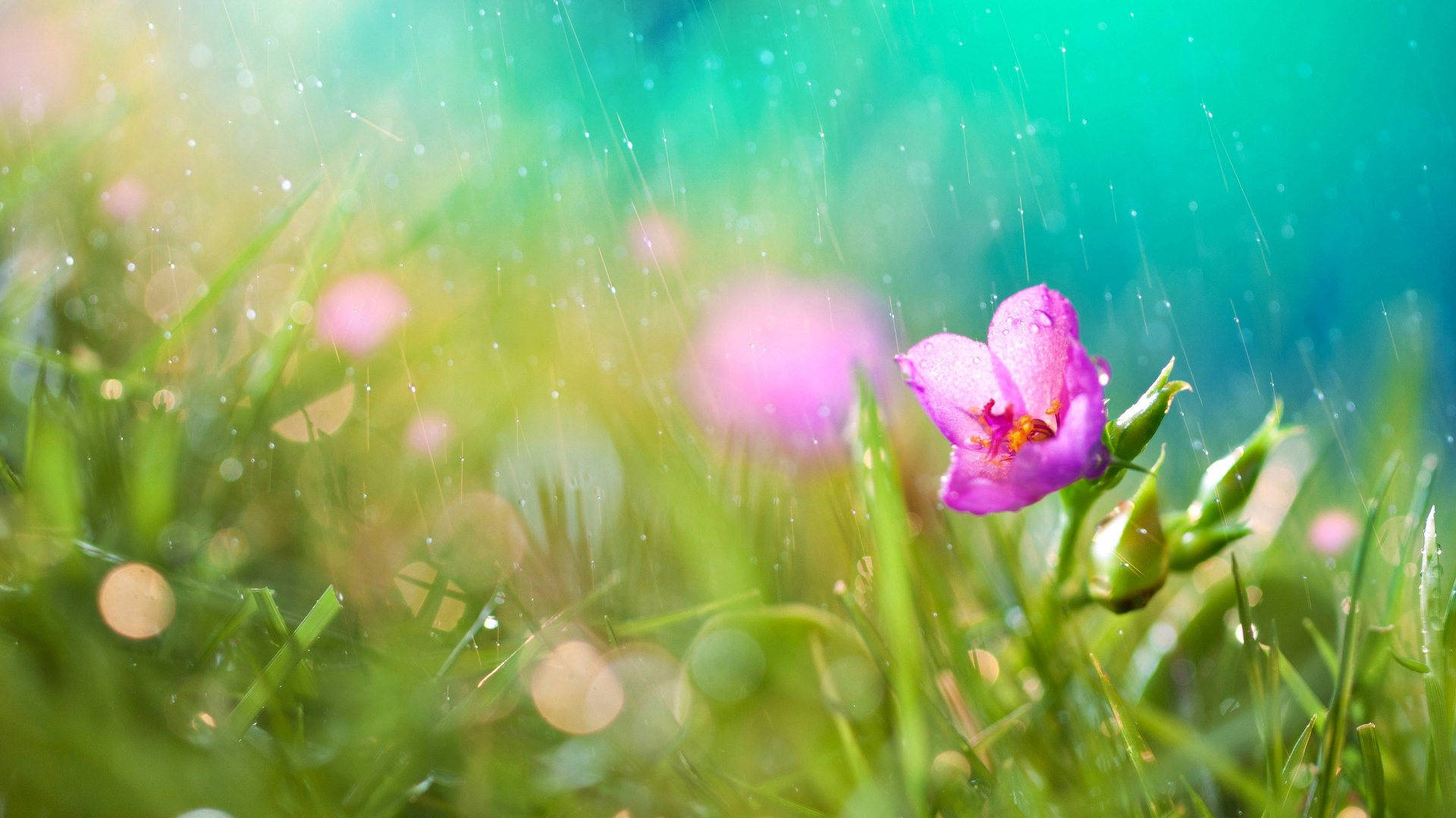 Free Download Wallpaper Desktop Flower Wallpapers Rainy Rain