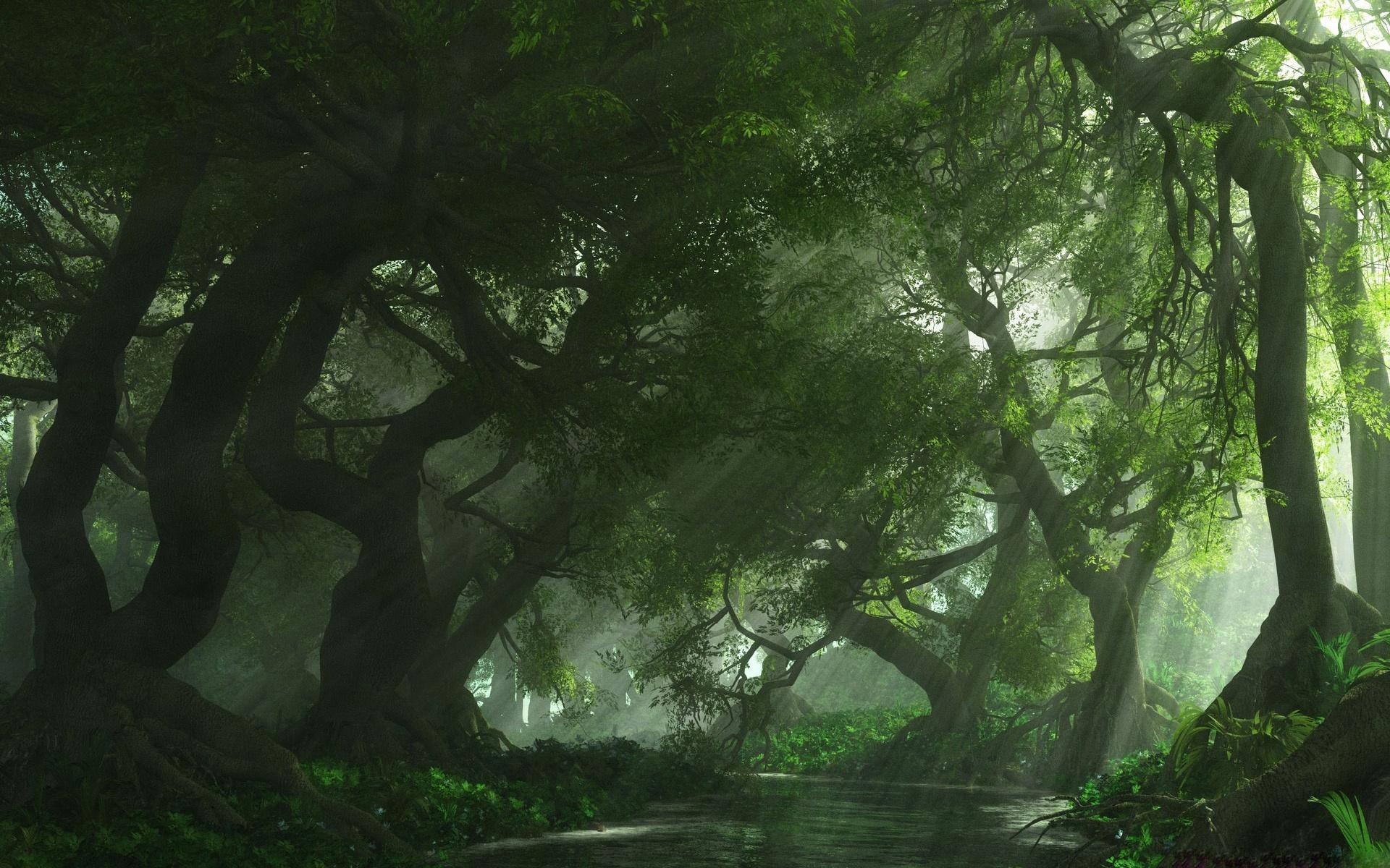 Green Forest wallpaper   806526 1920x1200