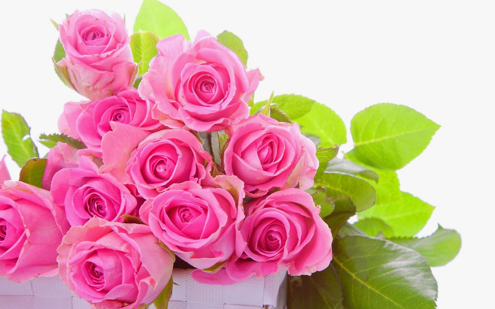 desktop wallpapers pink rose bouquet desktop backgrounds pink rose 1600x1000