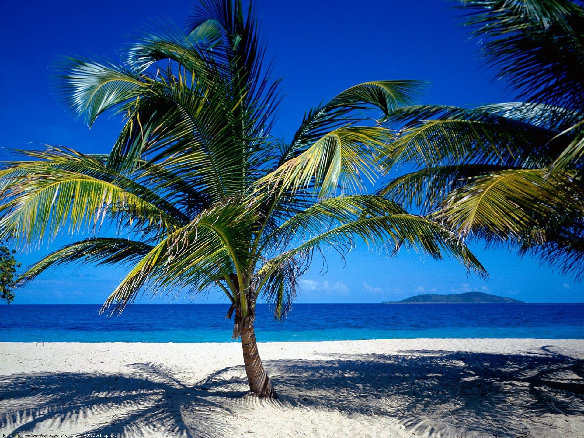 caribbean nature palm trees sea water best widescreen HD Wallpaper of 1920x1440