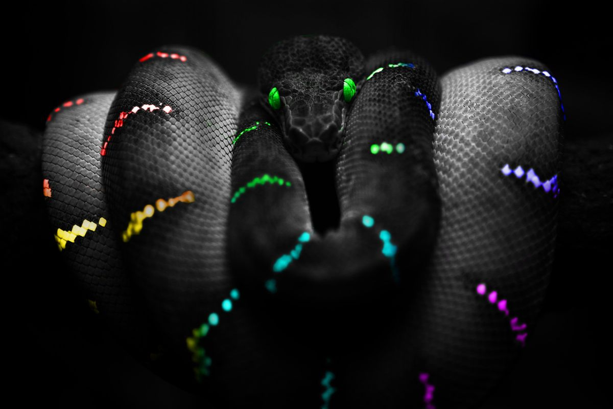 Neon Snake Wallpaper 1200x800
