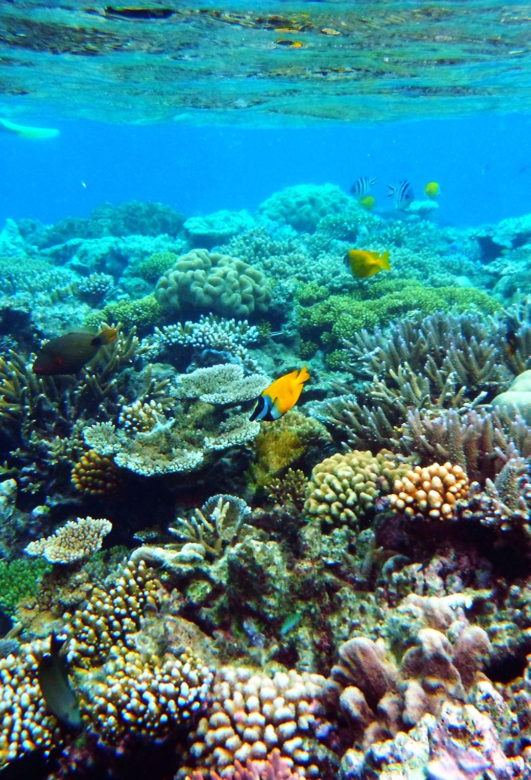 76 great barrier reef wallpaper on wallpapersafari - Great barrier reef desktop background ...
