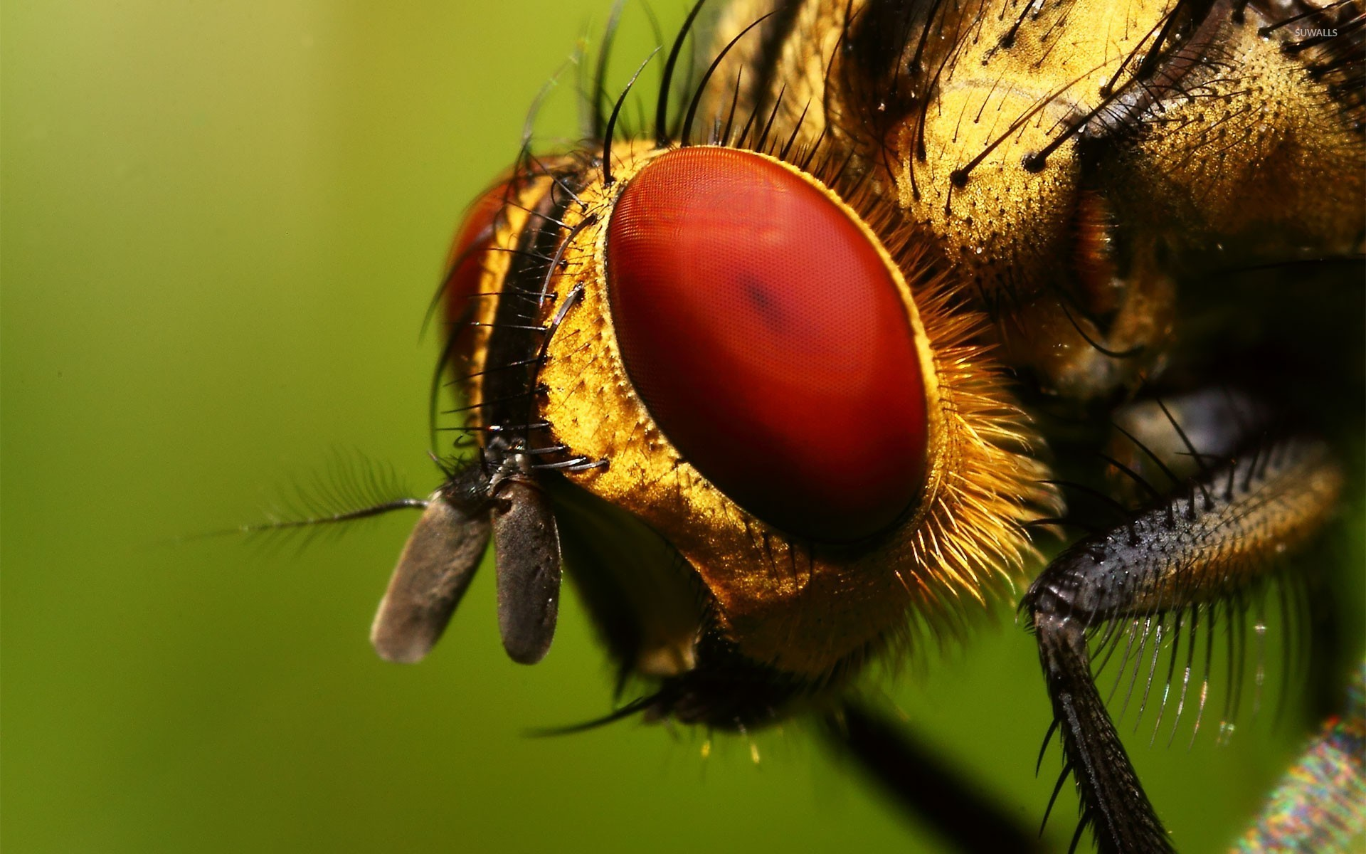 Insect wallpaper   Animal wallpapers   18389 1920x1200