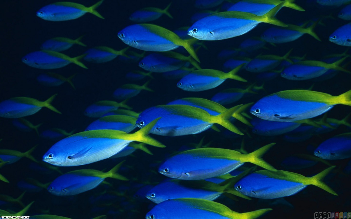 Blue Ocean Wallpaper with Fish