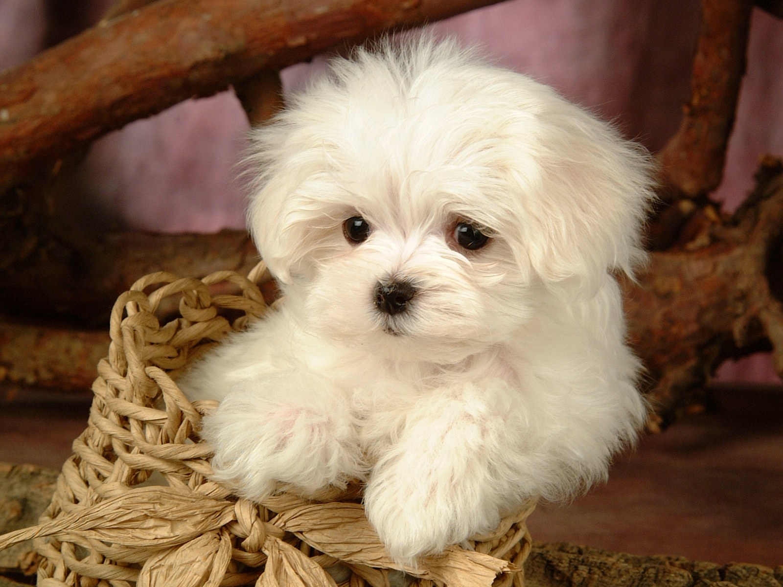 wallpapers hd puppy wallpapers hd puppy wallpapers hd puppy wallpapers 1600x1200