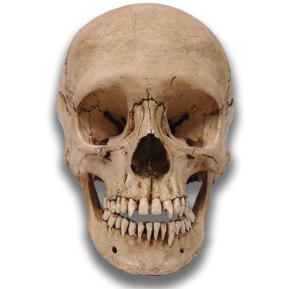 Real Skull HD 1000x1000