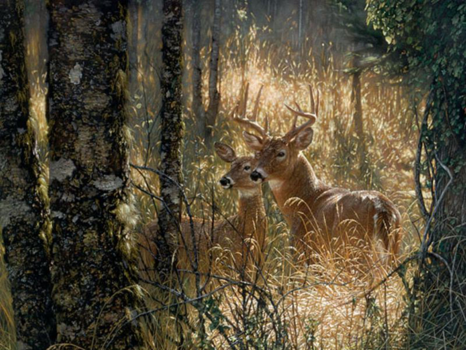 Definition deer wallpaperHigh Definition whitetail deer wallpaper 1600x1200