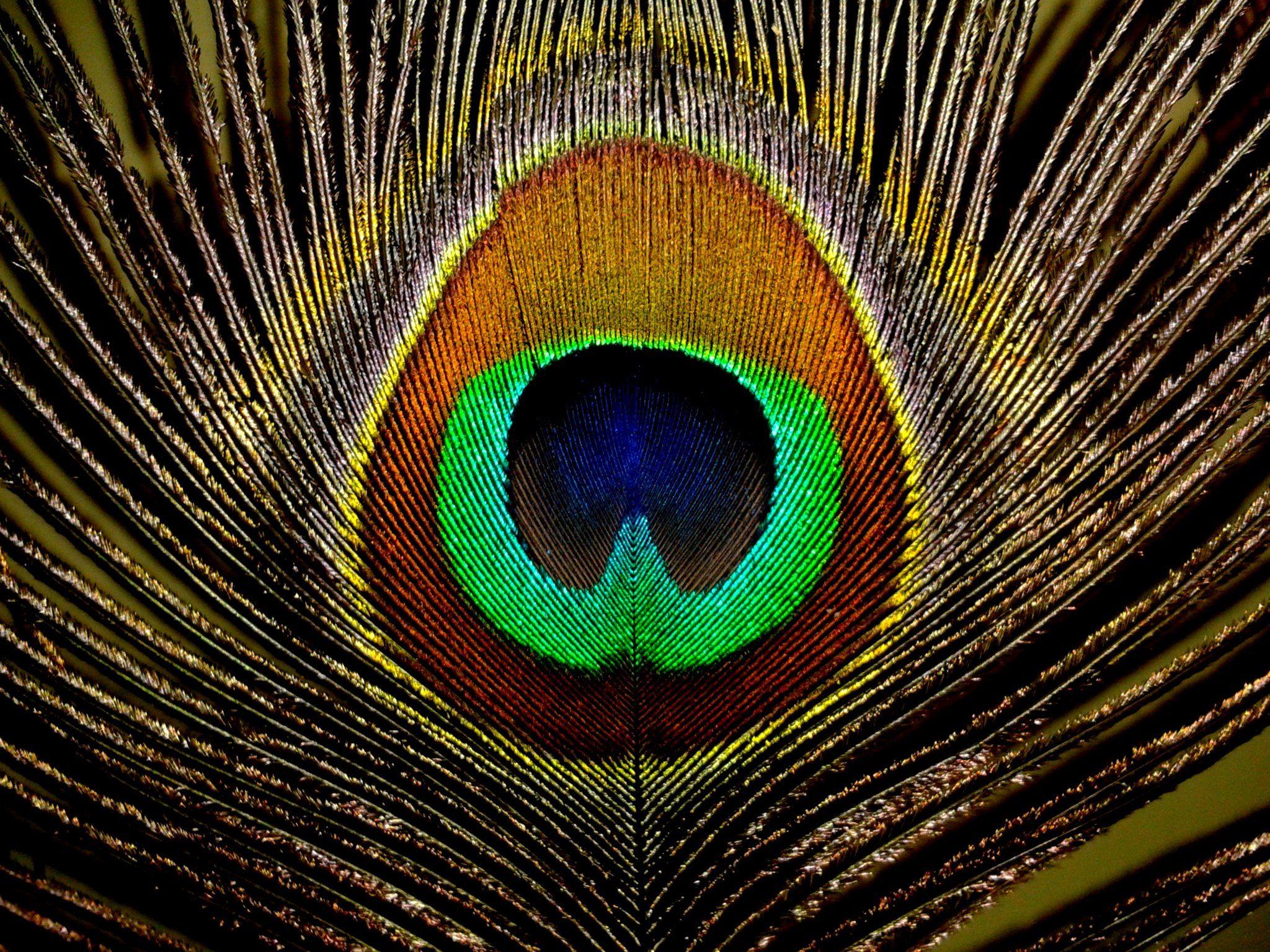 rainbow feathers wallpaper 2048x1536