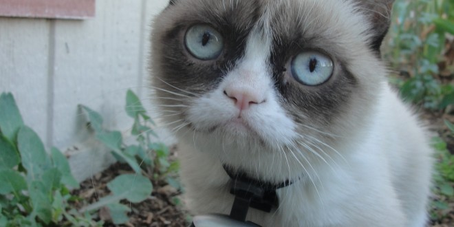 Grumpy Cat Wallpapers HD