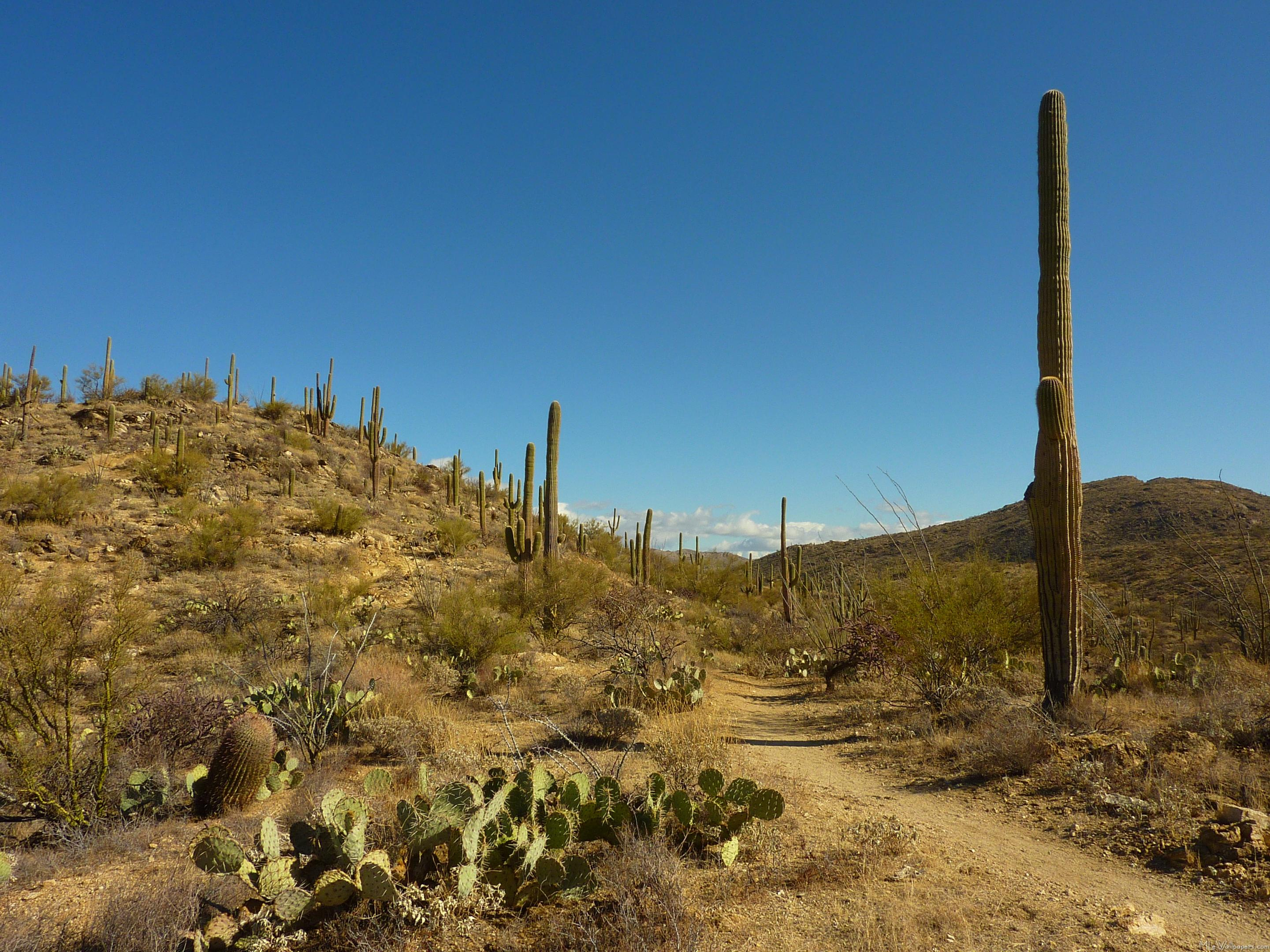 MLeWallpaperscom   Saguaros Carillo Trail 2881x2160