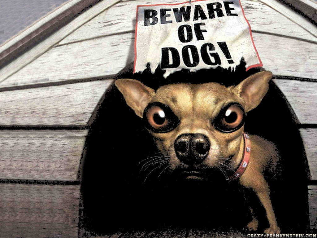 Funny Dog Wallpapers 7793 Hd Wallpapers in Funny   Imagescicom 1024x768