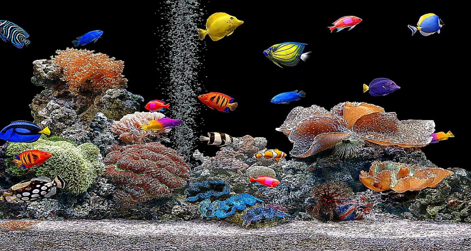 Живые обои аквариум рыбки на рабочий стол
