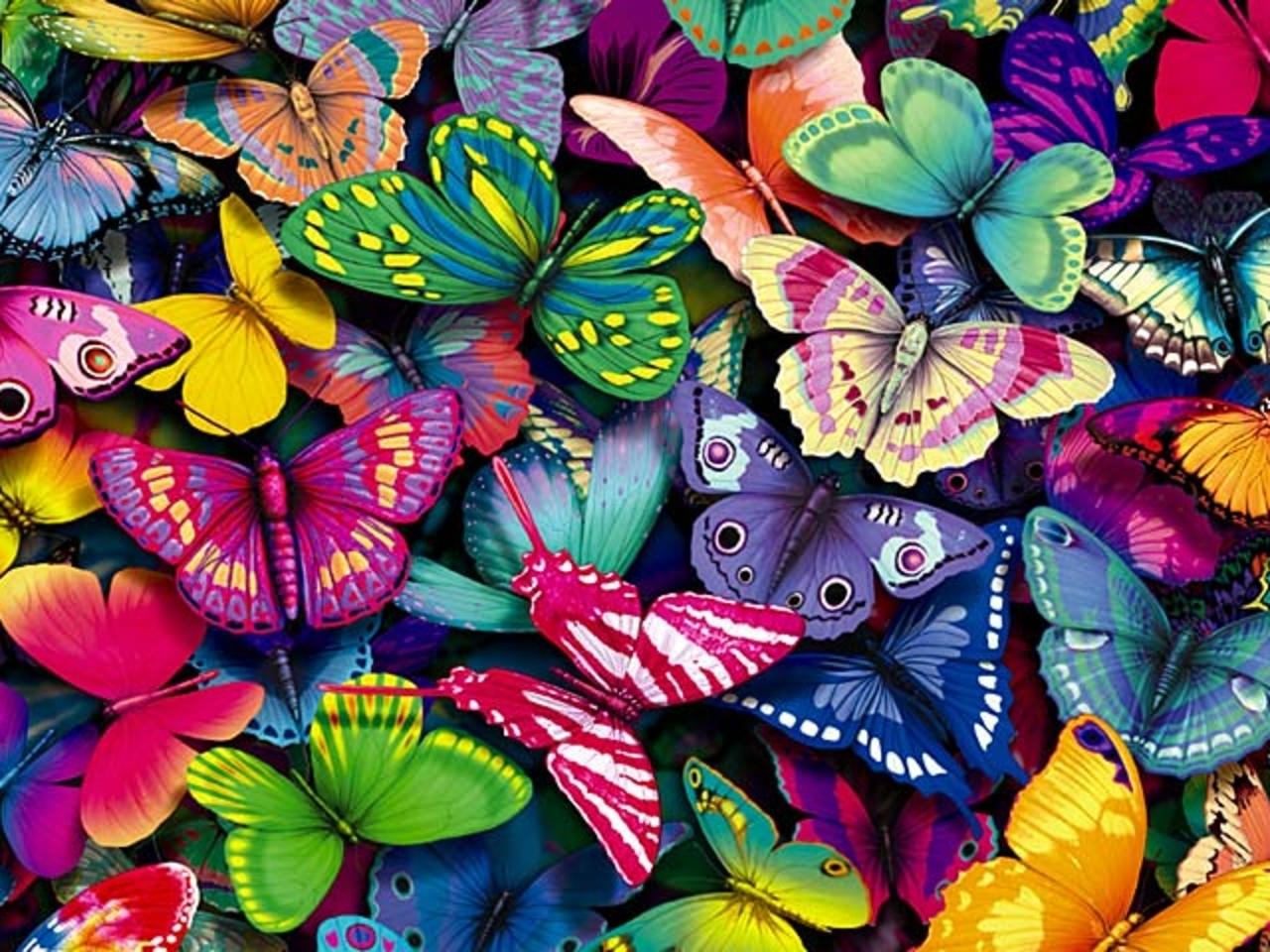 yorkshire rose images Butterflies wallpaper photos 15990936 1280x960