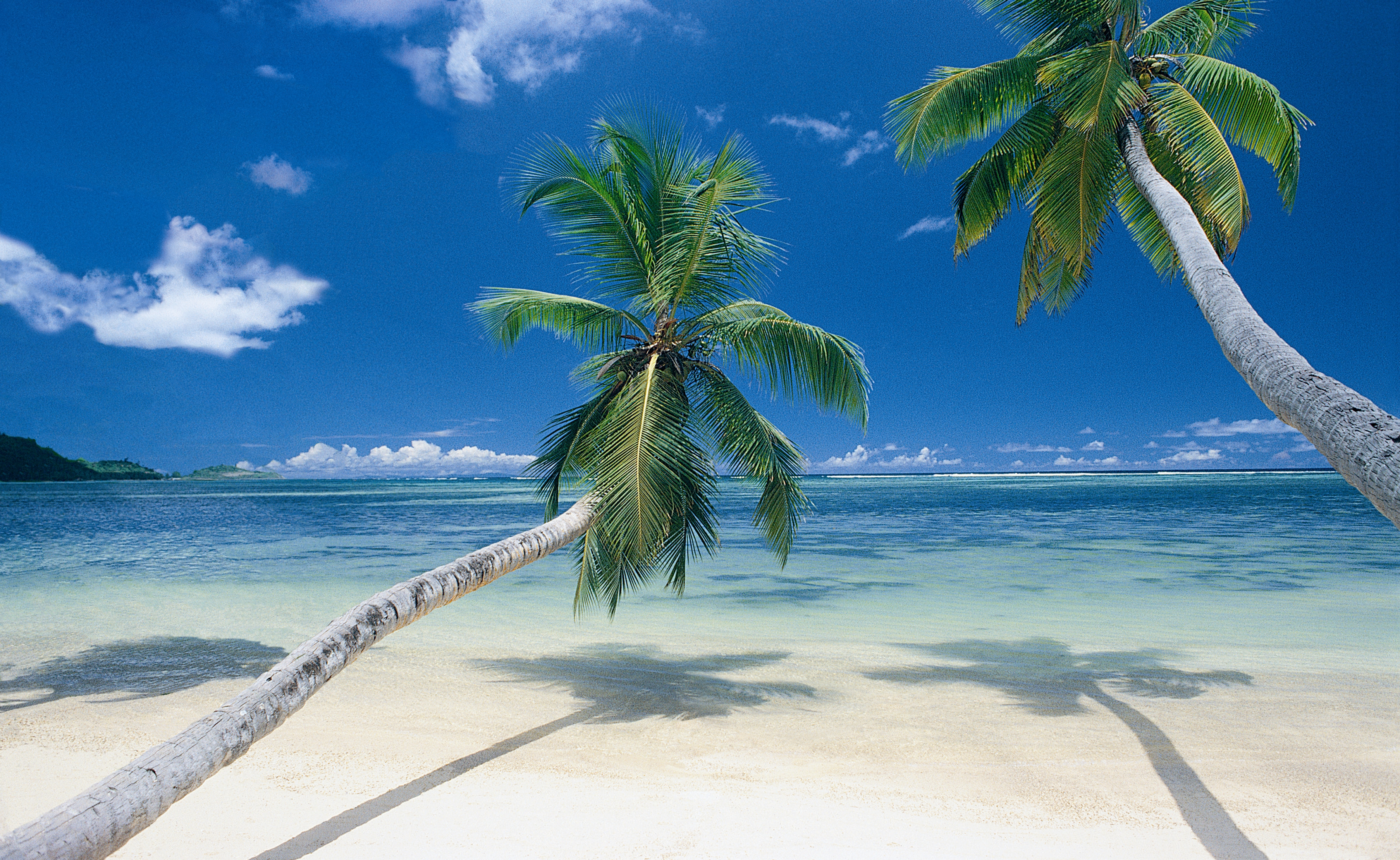 Palm trees on beach wallpapers and images   wallpapers pictures 3614x2221