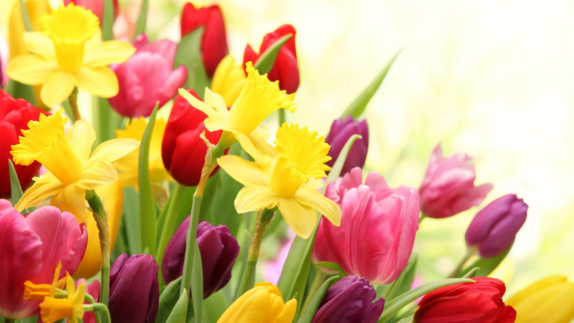 Spring Flowers HD Wallpapers 1920x1080