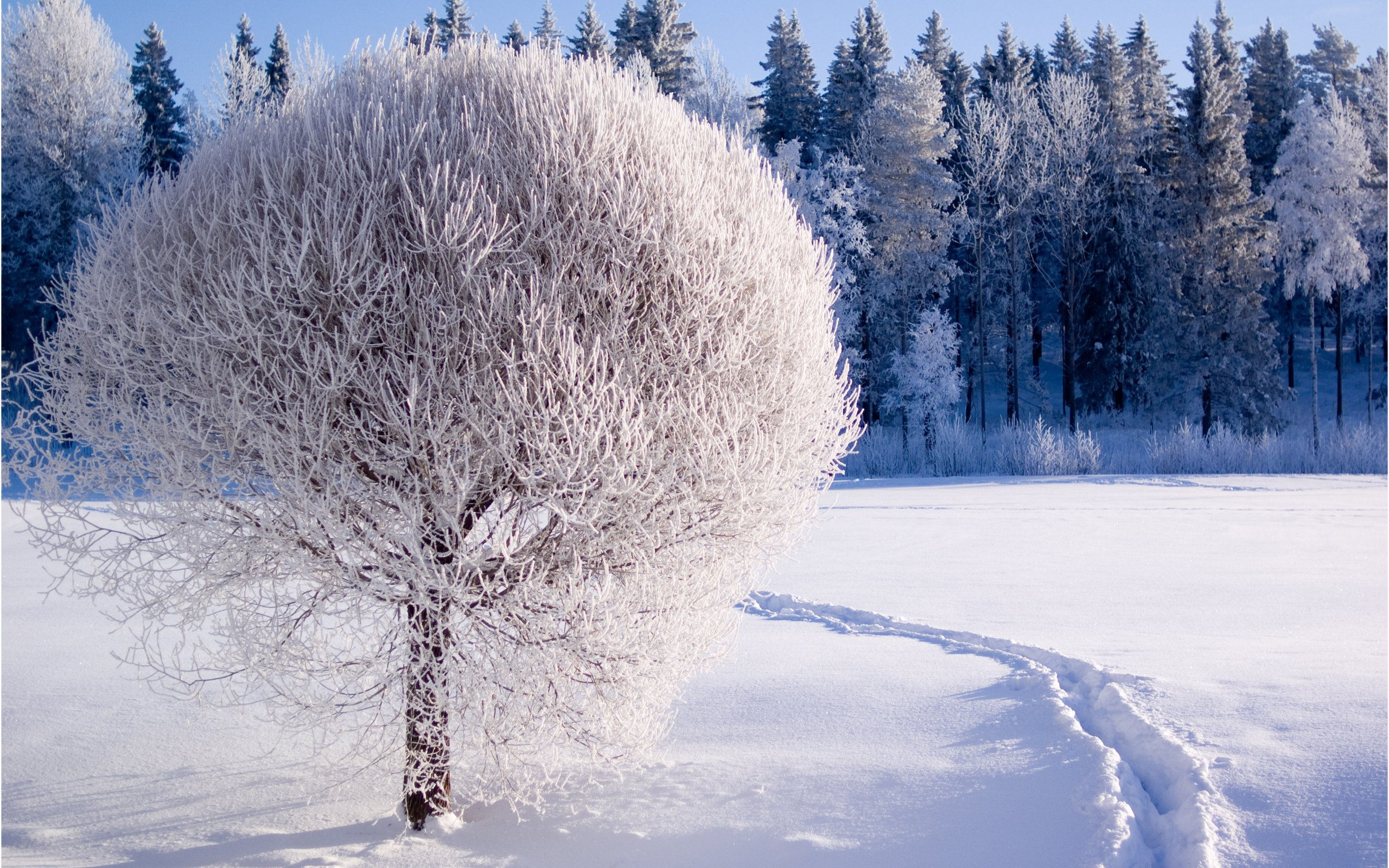 Nature Winter Wallpapers HD 2560x1600