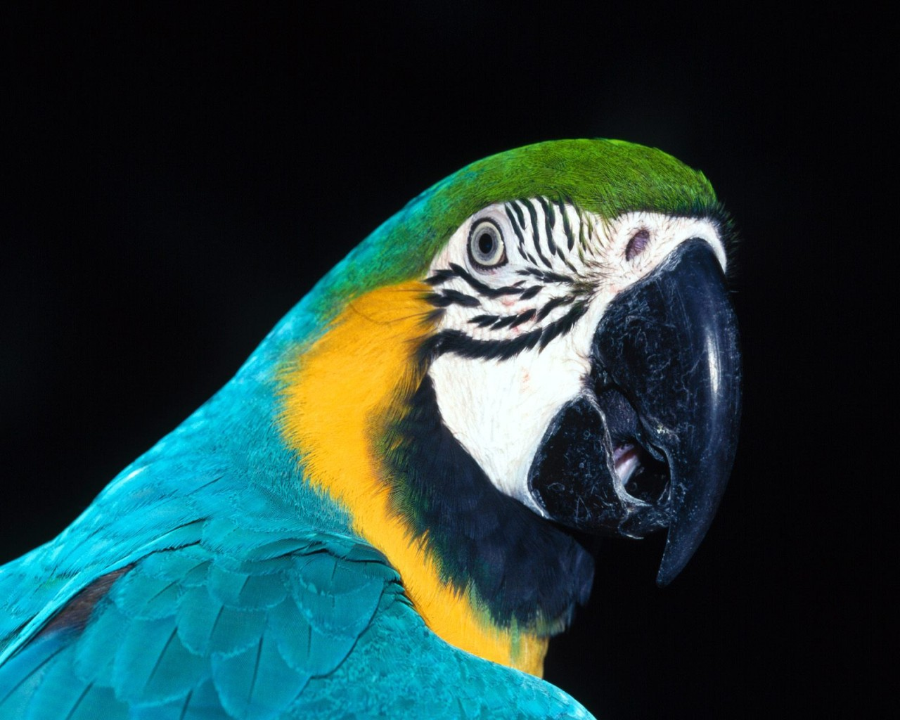 wallpaper you are viewing the birds wallpaper named parrot head it has ...