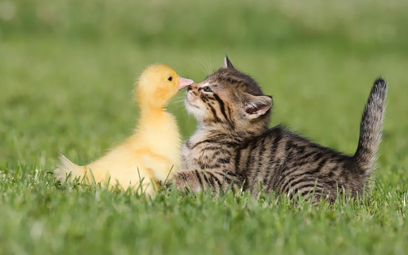 Cute Funny Animal Hd Backgrounds 1600x1000 pixel Popular HD 1600x1000