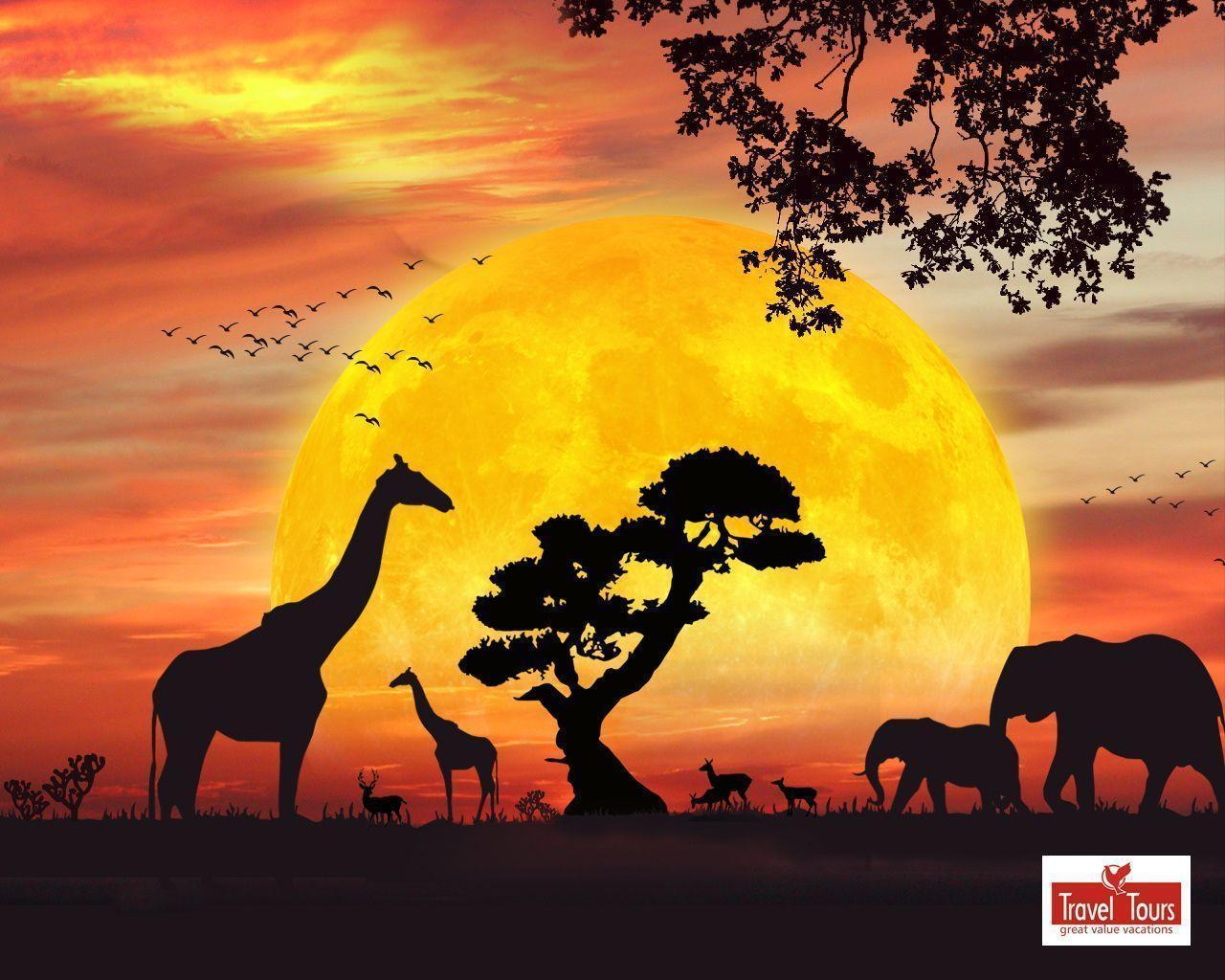 Free Download Safari Wallpapers 1280x1024 For Your Desktop