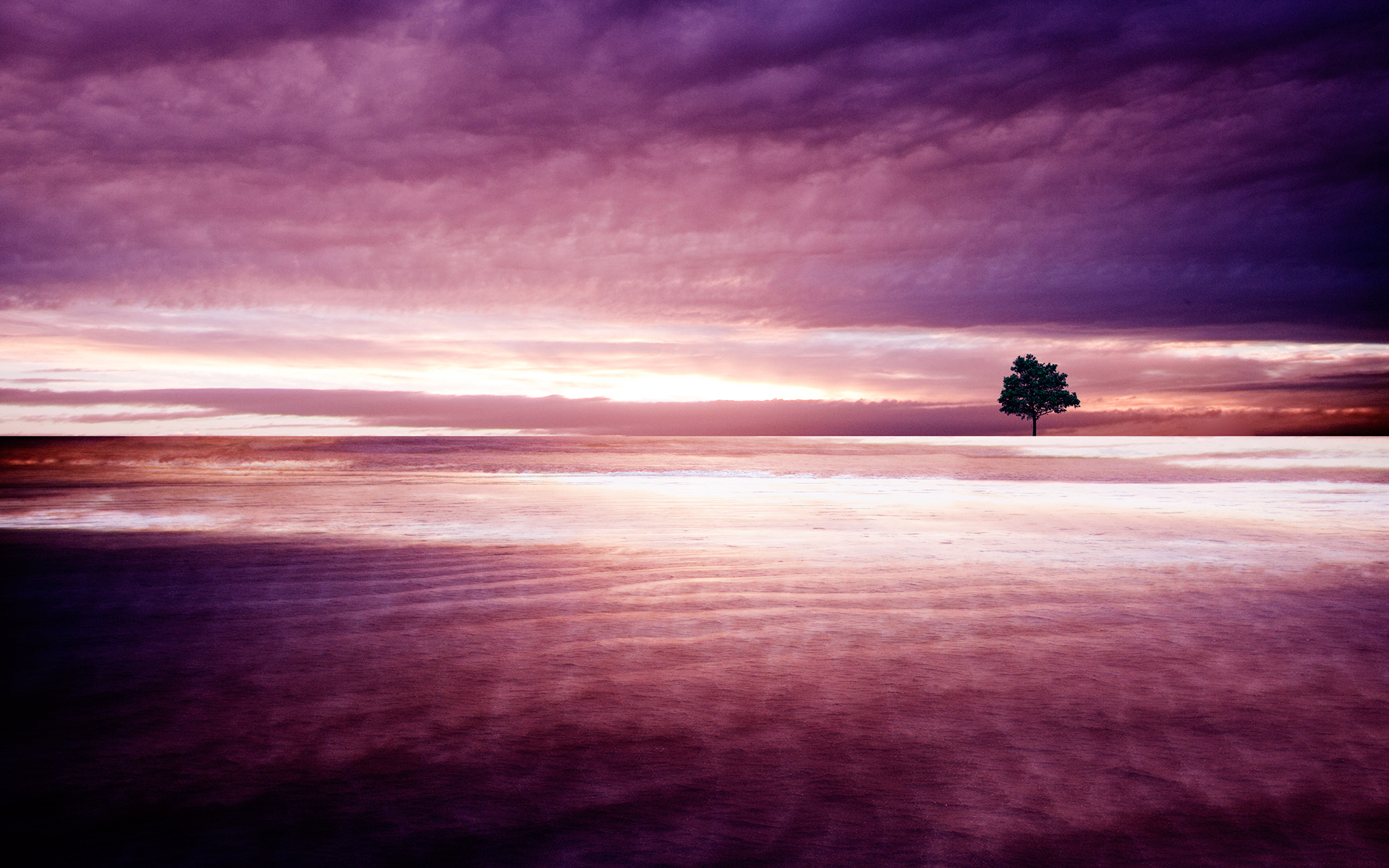 Purple Nature Wallpapers HD Wallpapers 1920x1200