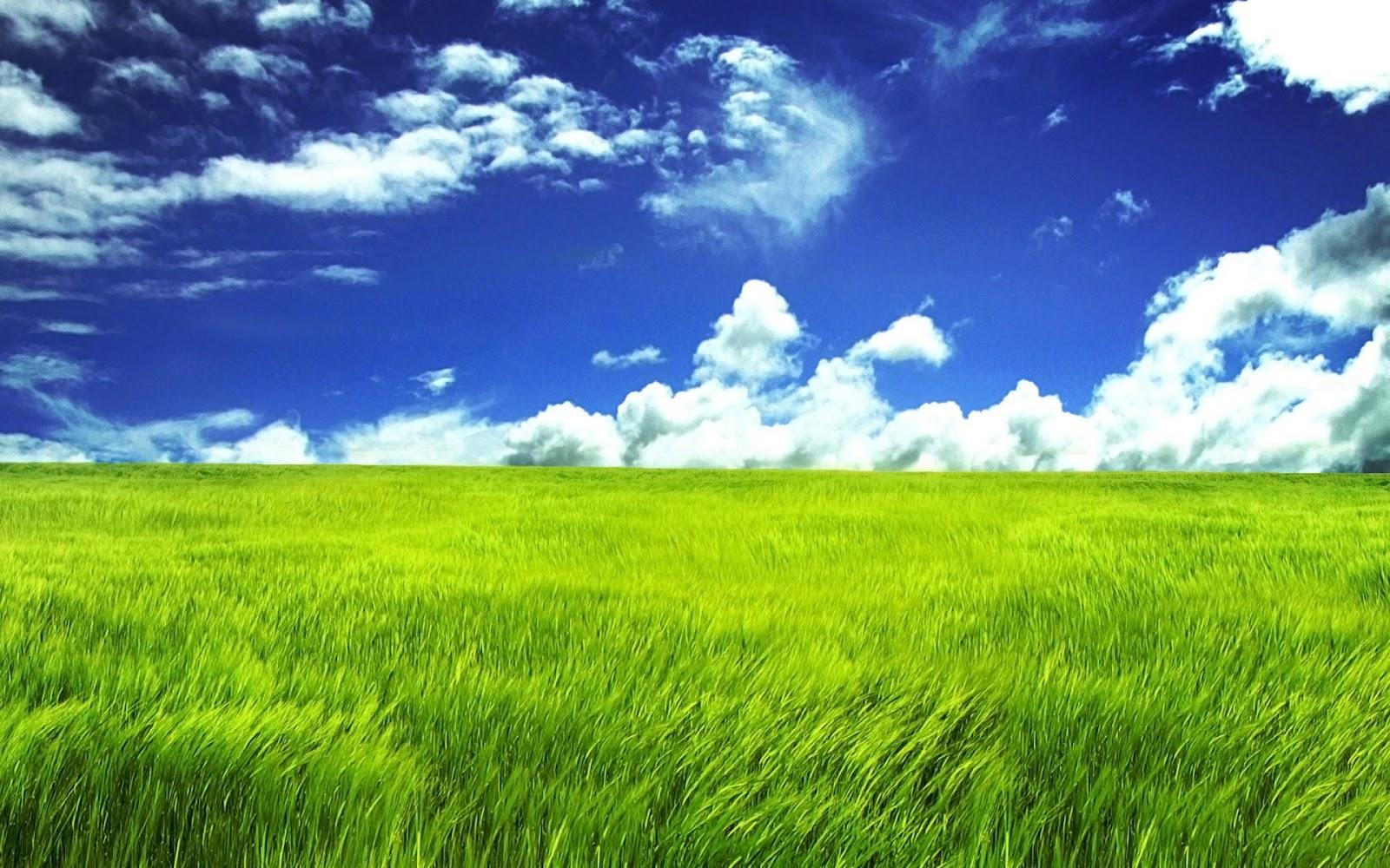 Beautiful HD Wallpapers Amazing Spring Grassland Desktop Wallpaper 1600x1000