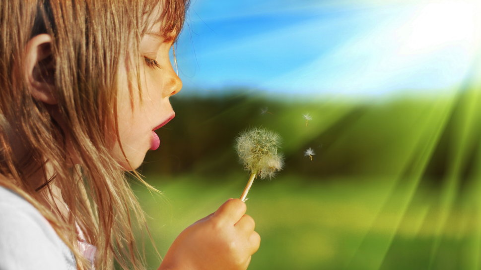 Blowing Dandelion Wallpaper Blowing Dandelion Wallpaper