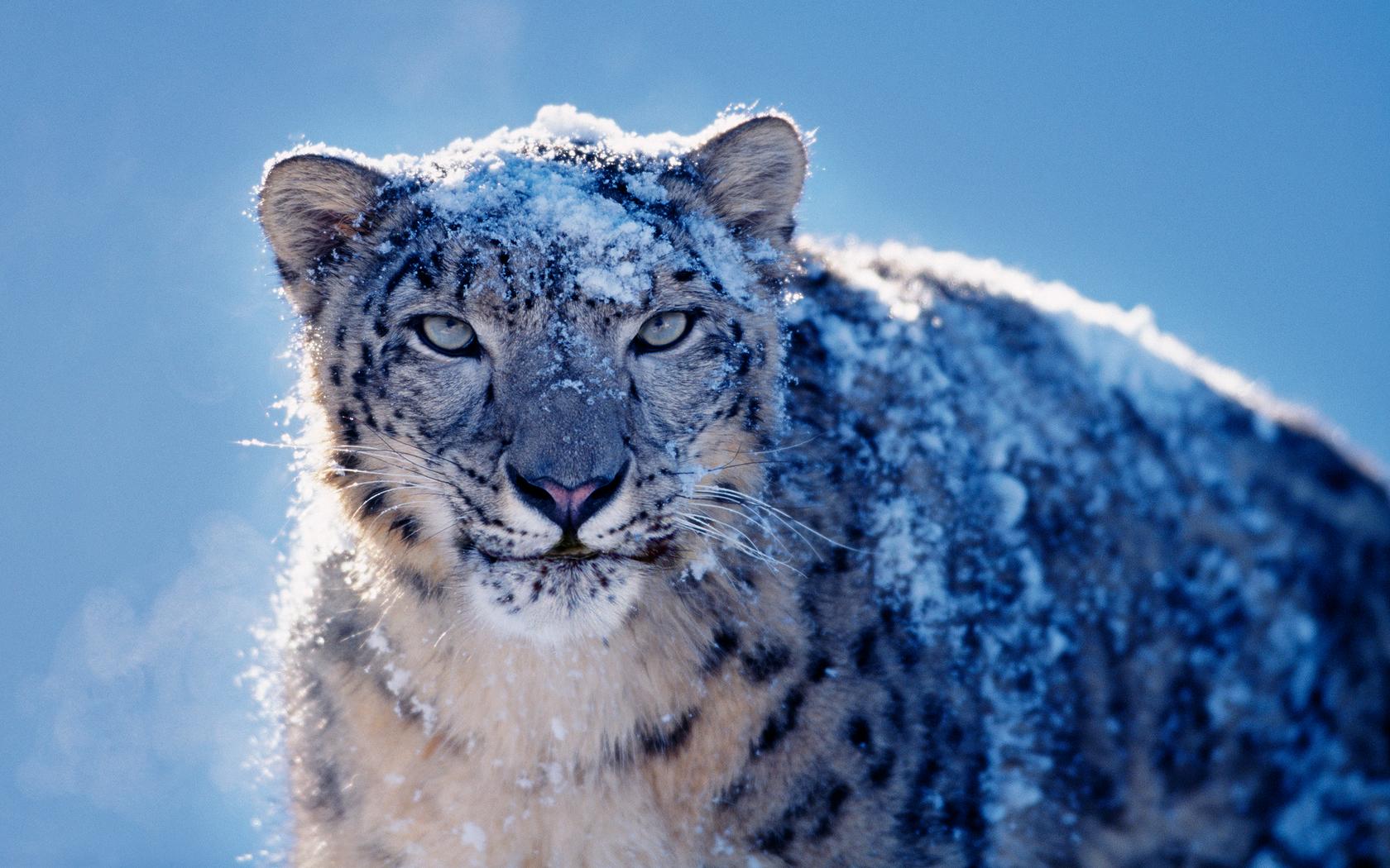 10.6 snow leopard iso