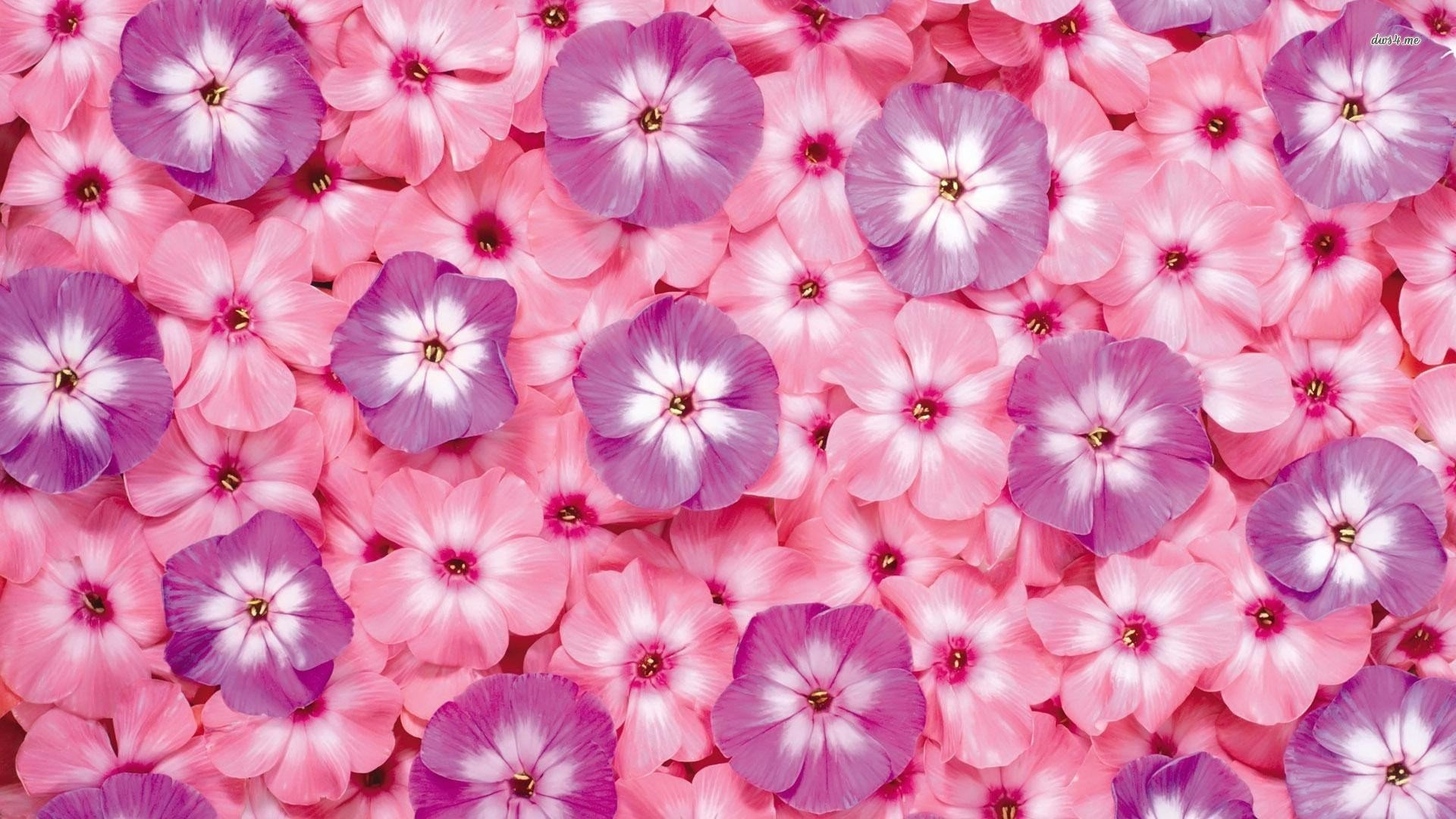 Small pink and purple flowers wallpaper 1280x800 Small pink and purple 1920x1080