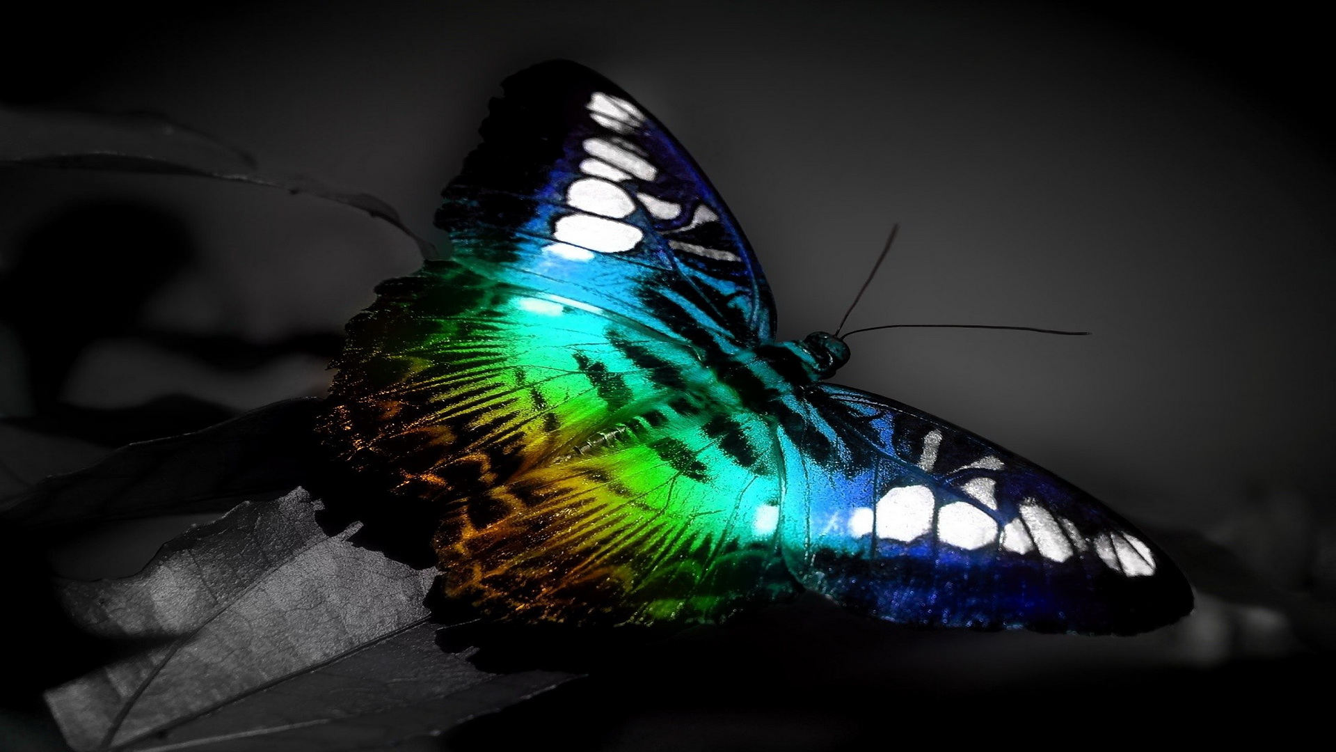 3D Wallpapers Backgrounds colorful butterfly HD Wallpapersjpg 1920 1920x1080