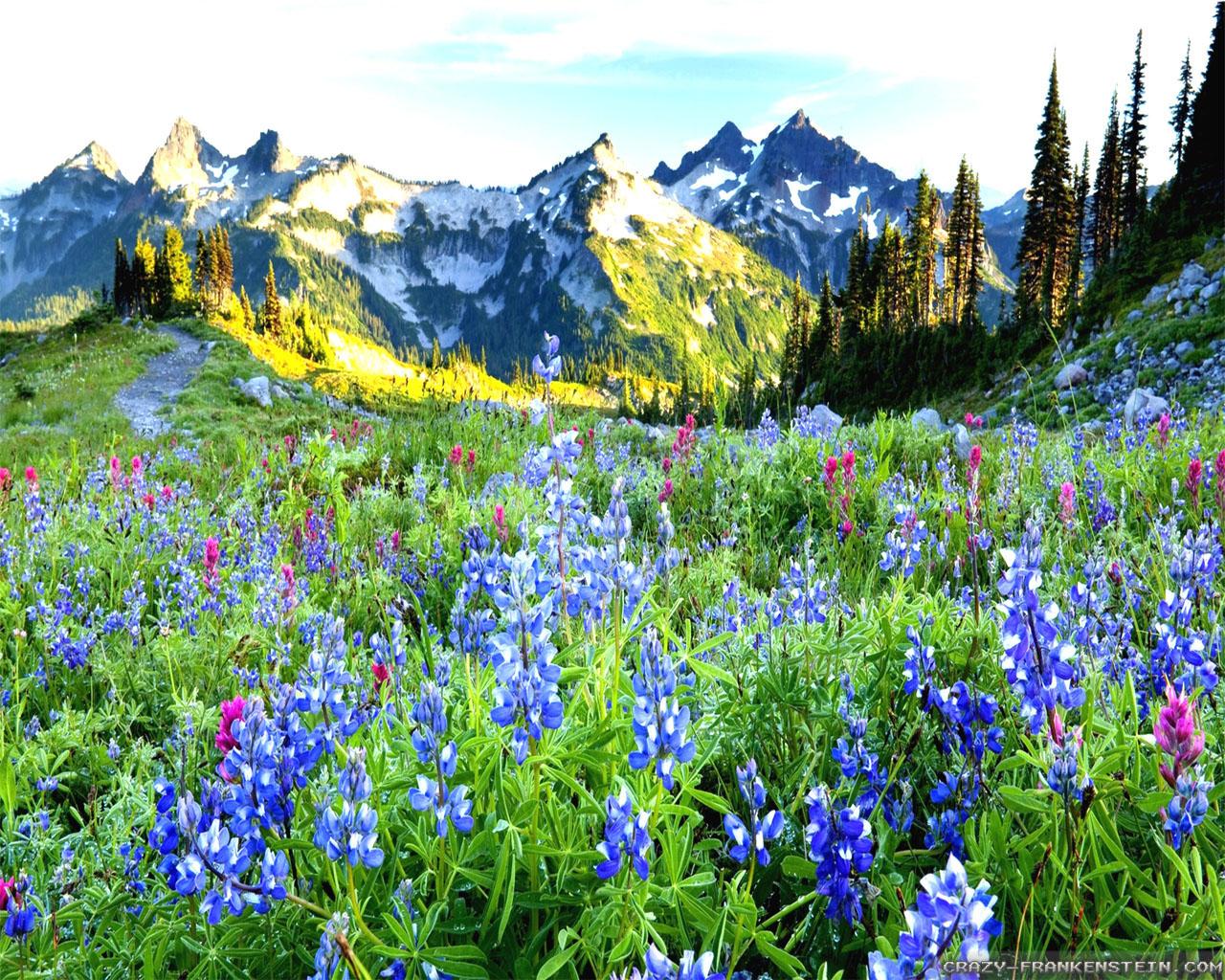 Beautiful Spring Scenery Wallpapers - WallpaperSafari