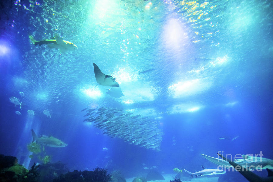 Undersea deep background Photograph by Benny Marty 900x600