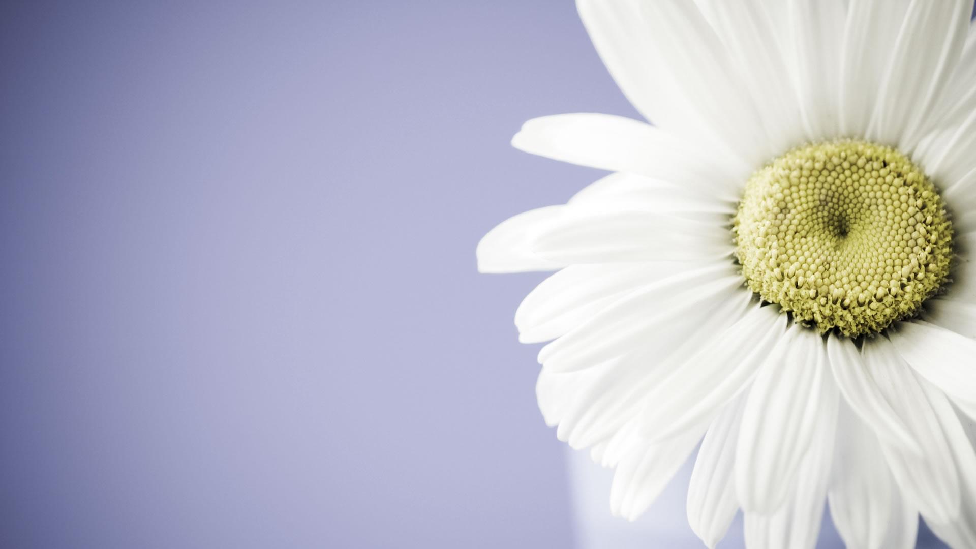 1920x1080 creative coffee flower - photo #4