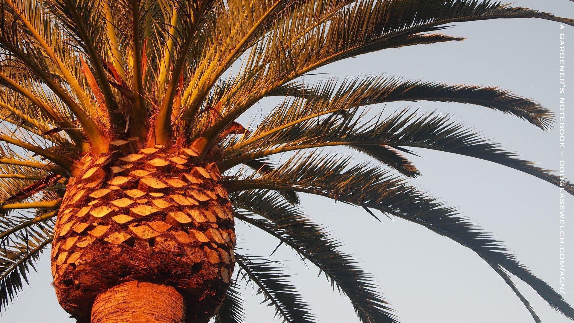 Palm Tree Desktop Wallpapers 1920x1080