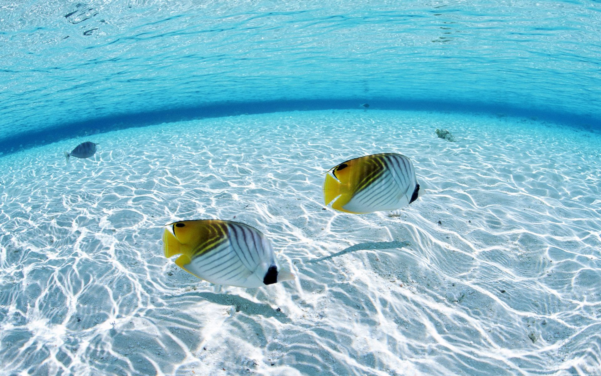 Undersea Wallpaper Wallpapersafari