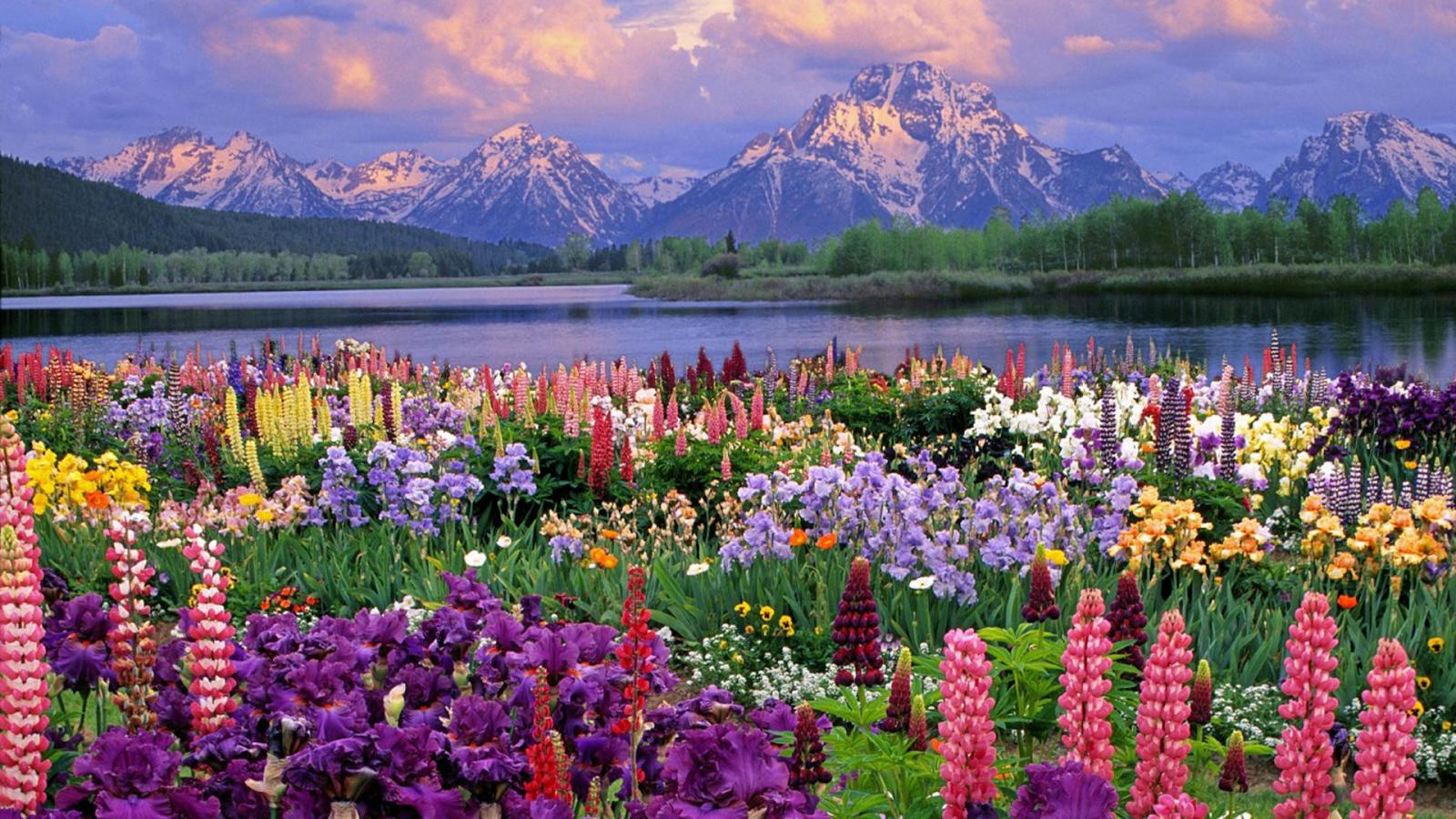 Цветы в природе красивое фото