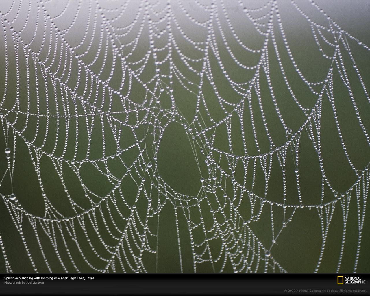 Spider Web Photo Spider Web Wallpaper Download Photos    National 1280x1024