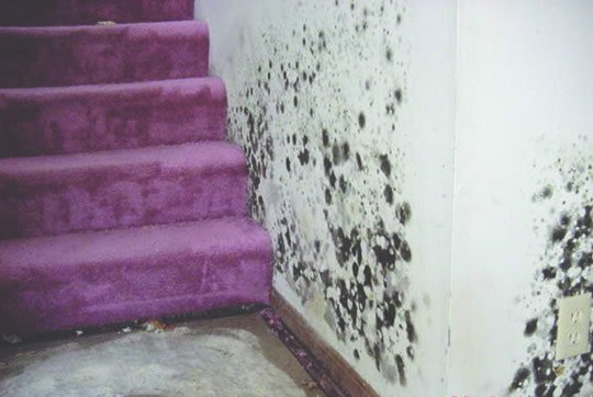 How To Remove Mold From Your Home 540x362