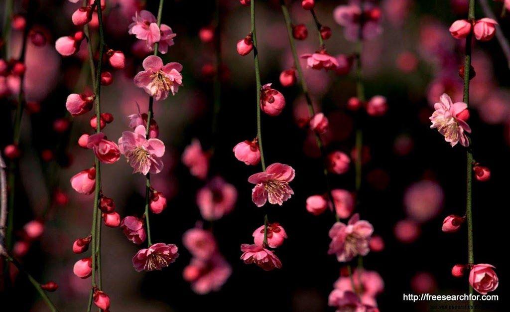 Desktop Wallpaper HD 3D Full Screen Flowers 1 in 2020 Spring 1024x626