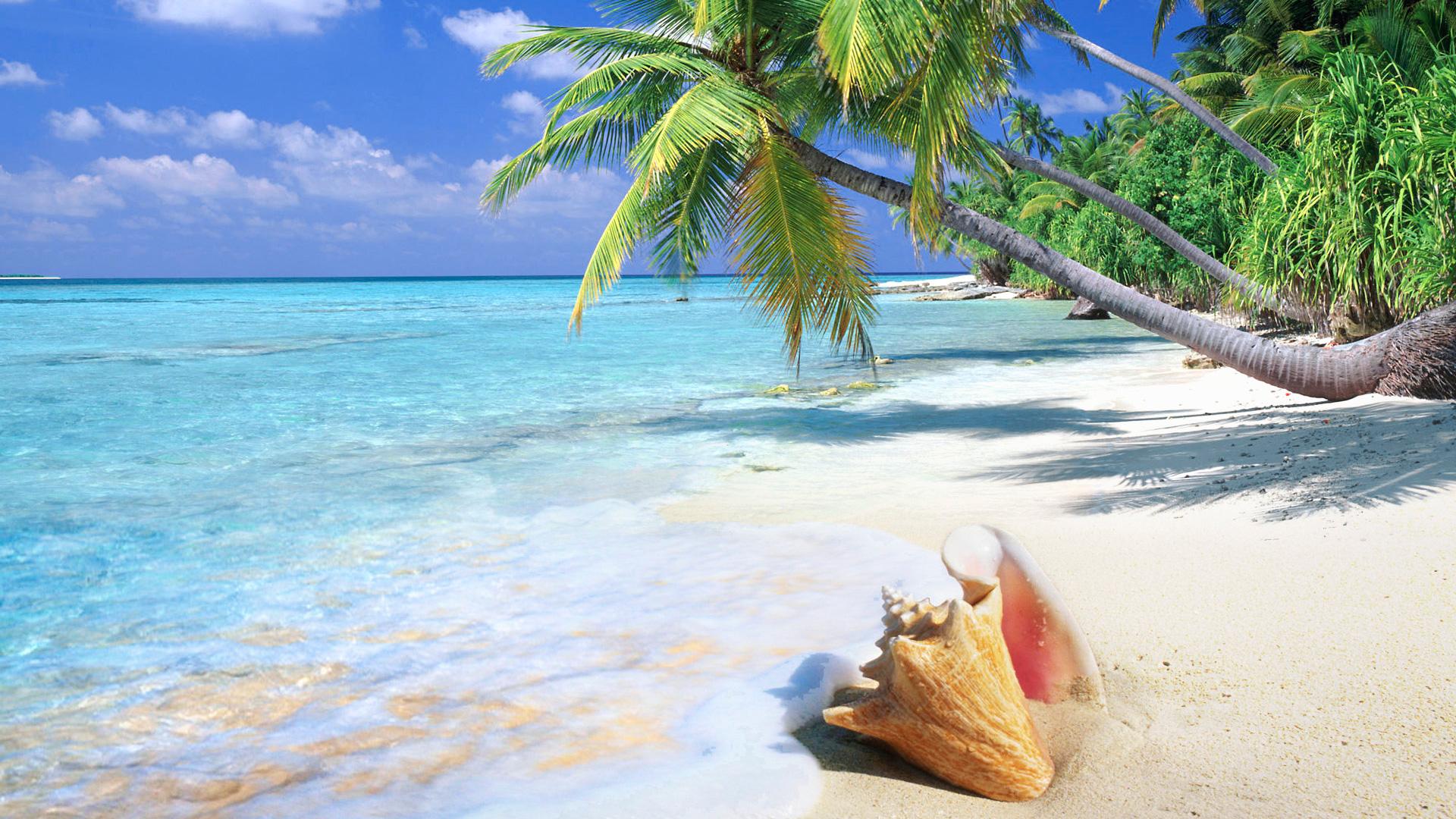 hd wallpaper tropical beach shell wallpapers55com   Best Wallpapers 1920x1080