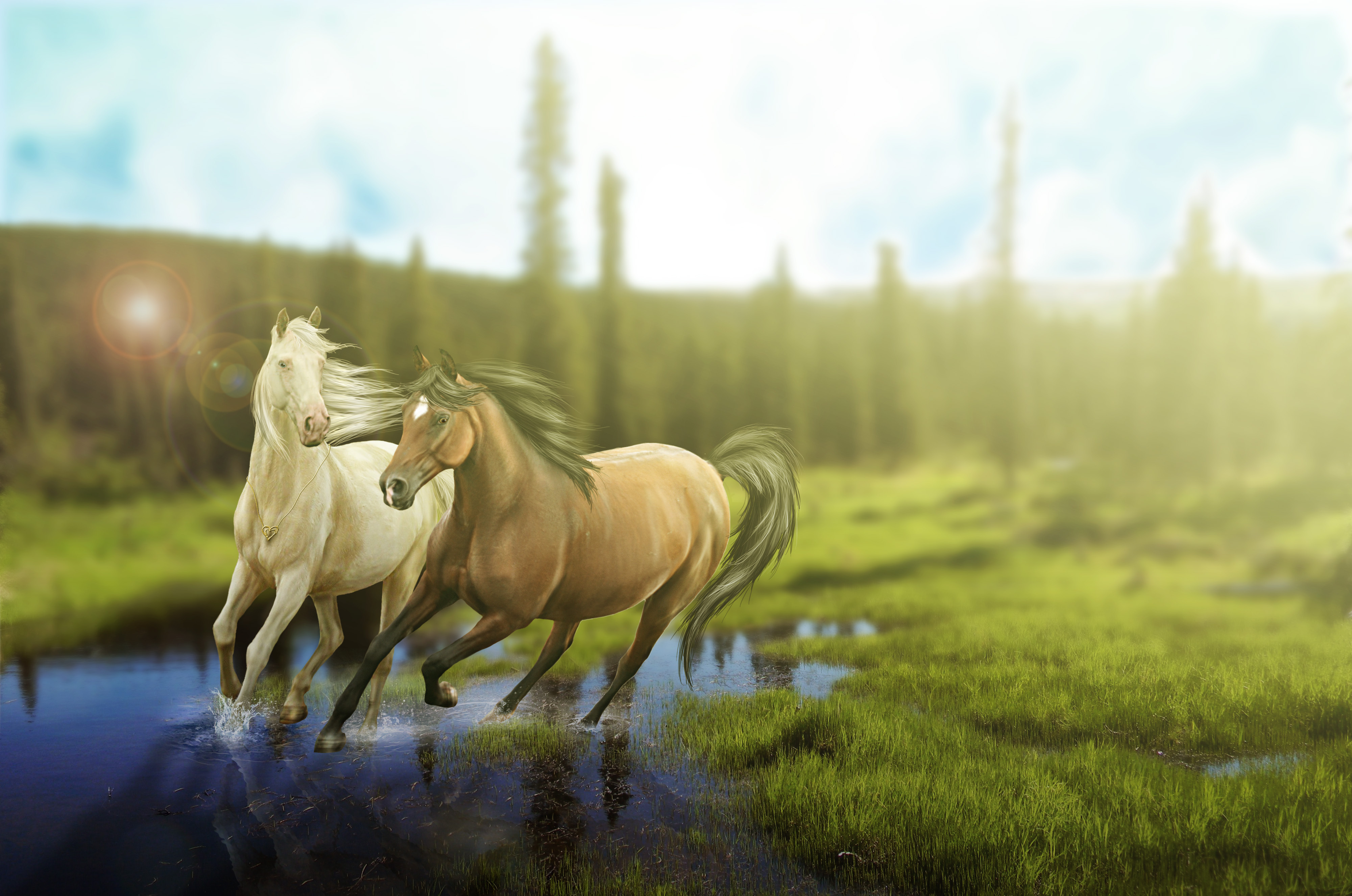 Free Download Awesome Collection Horse Painting Wallpapers Hdq