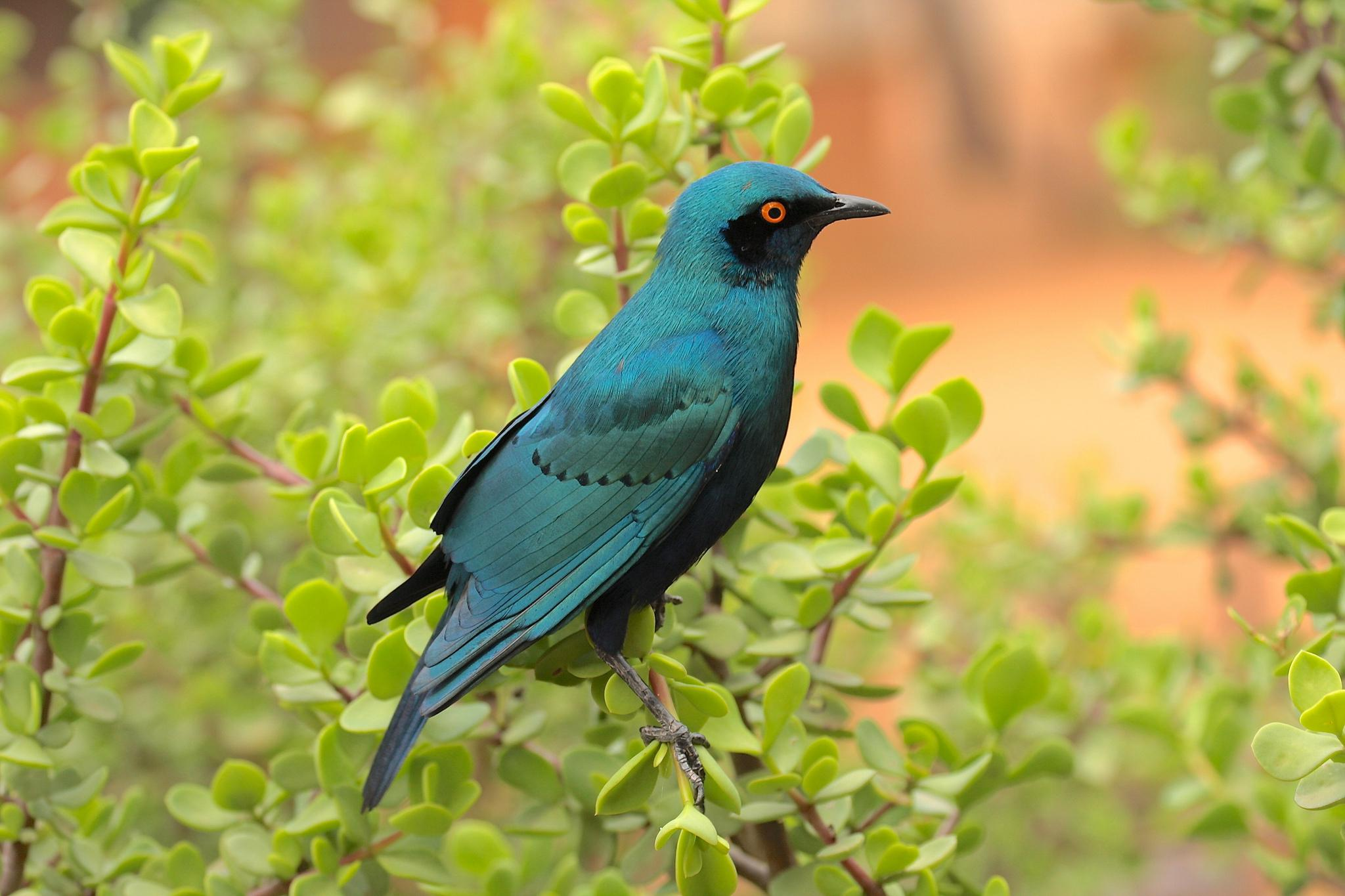 blue bird   128309   High Quality and Resolution Wallpapers on 2048x1365