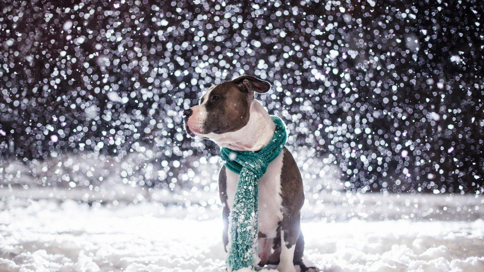 Dog and snow wallpaper   ForWallpapercom 1600x900