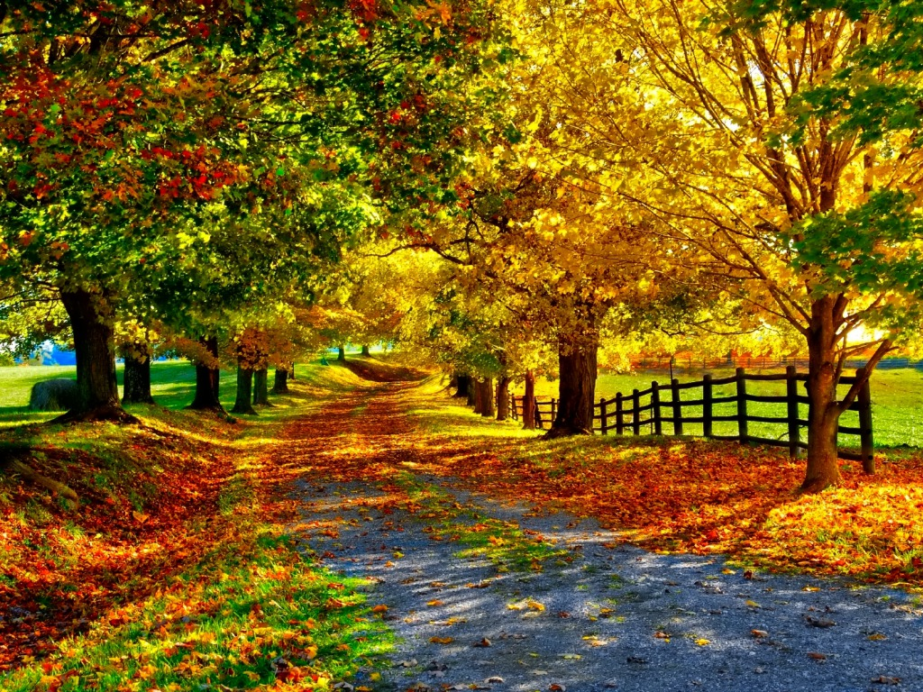 Fall Wallpaper Backgrounds Wallpapersafari