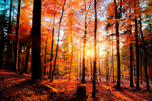 nature autumn leaves fall fall leaves woods forest trees 500x332