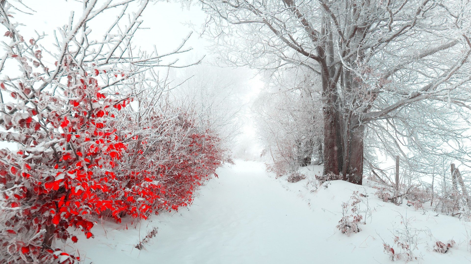 Cute Winter Wallpapers 39   Page 3 of 3   hdwallpaper20com 1920x1080