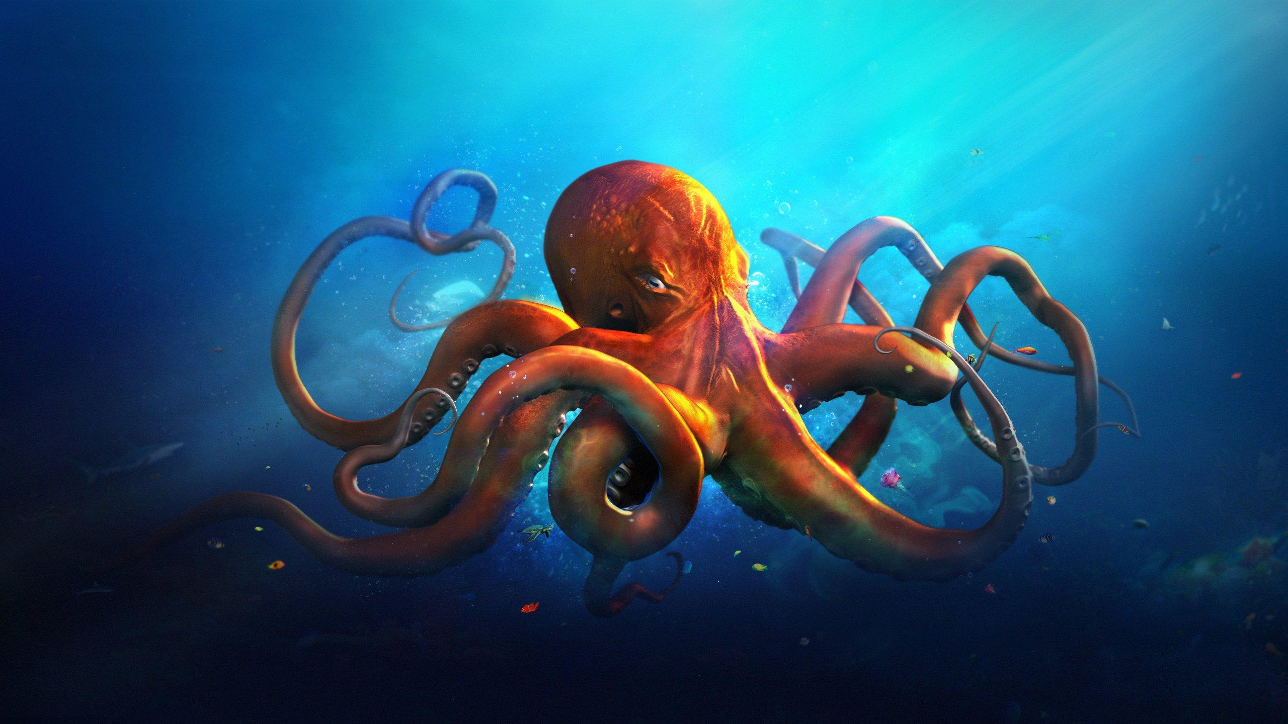 Animals octopus ocean sea fantasy artwork art wallpaper background 2560x1440