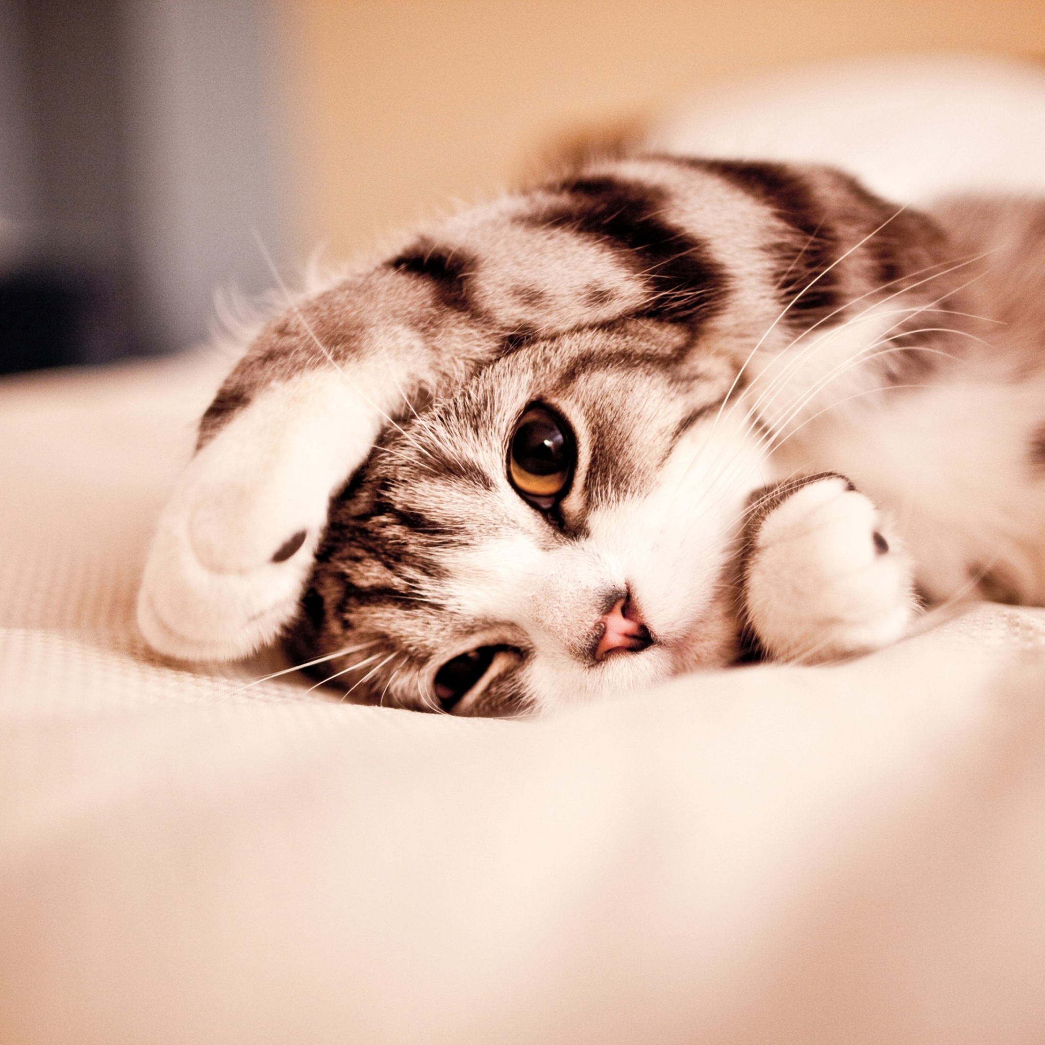 Cat Wallpapers For Iphone: Cute Cat Wallpaper For IPad