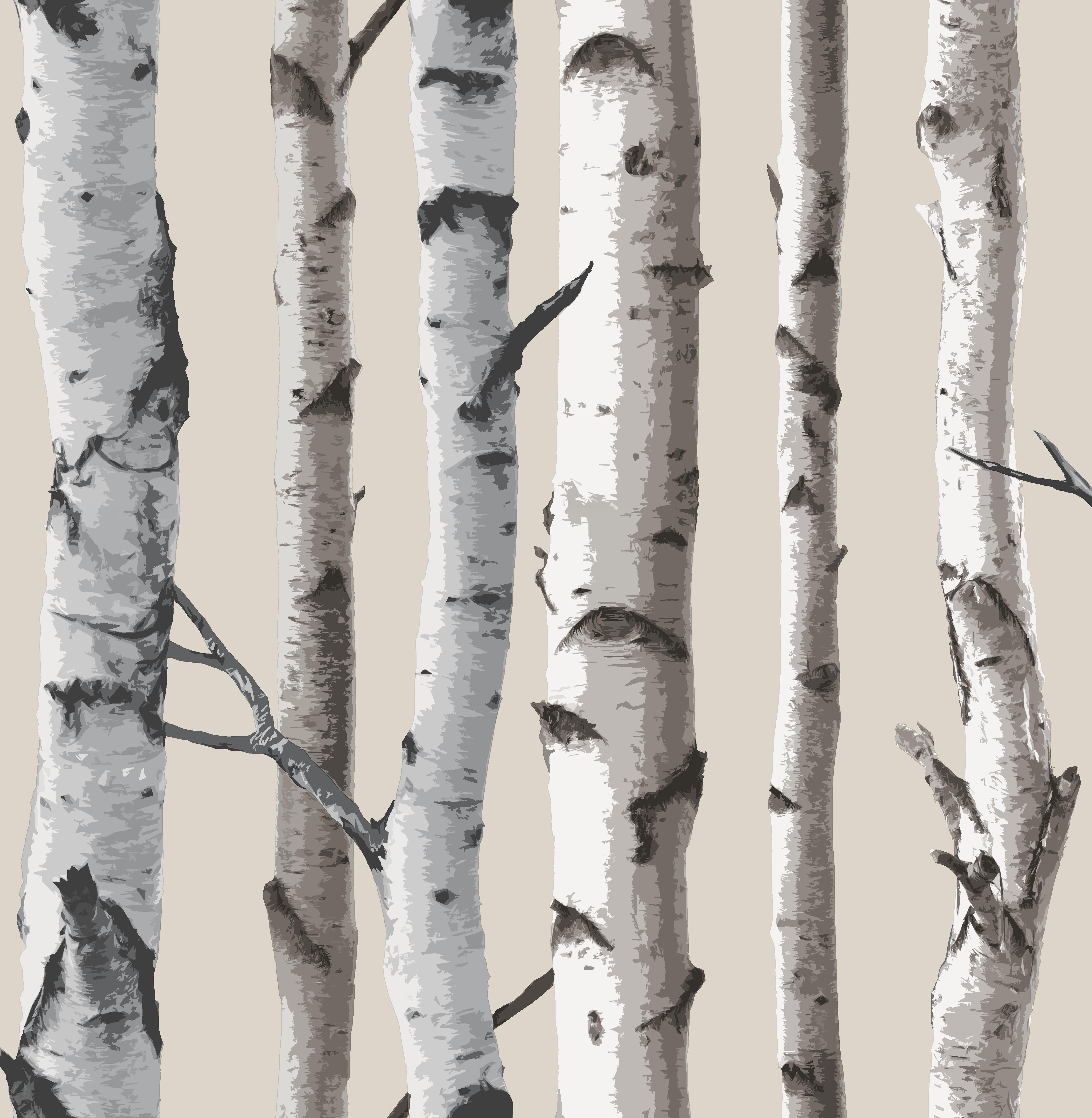 birch tree wallpaper fd31051 8 99 fine decor wallcoverings birch 5207x5334